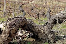 Crasto vinha velha
