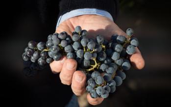 No Chile e Argentina safra 2017 foi difícil, mas com bons vinhos