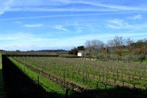 Casa da Passarella vinhas