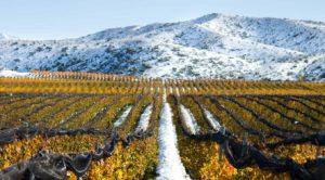 Dos vinhedos Catena saem grandes vinhos