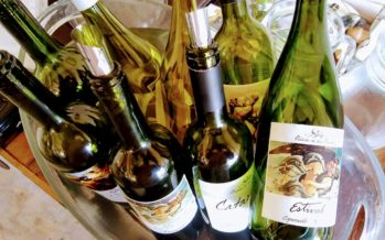 Maldonado e a influência do Atlântico nos vinhos uruguaios